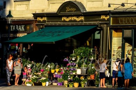 Florarie in Stephansplatz